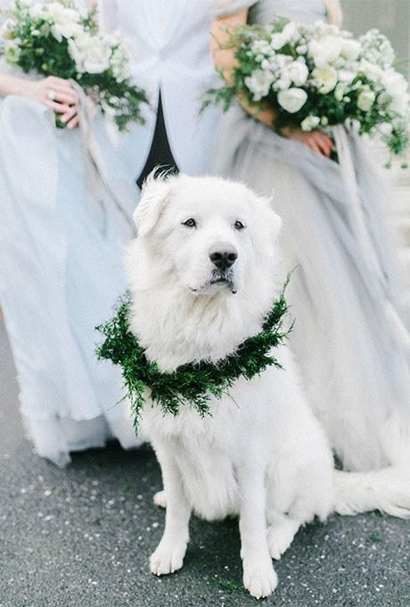 Как питомец может стать помощником на свадьбе?